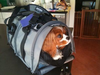 Trasportes de mascotas