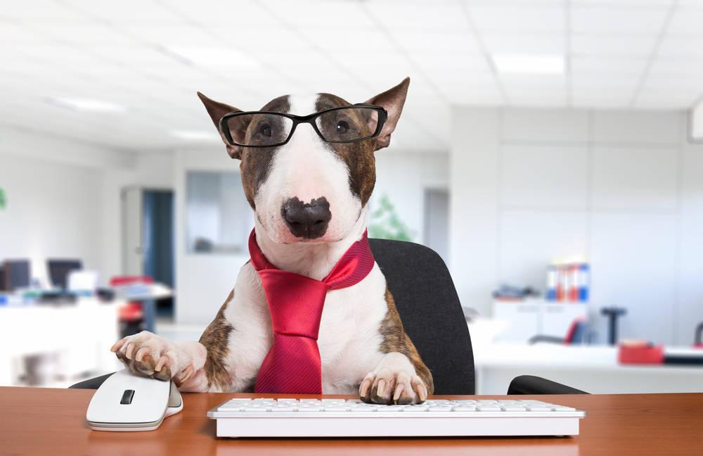 Mascotas que acompañan a sus humanos al centro de trabajo