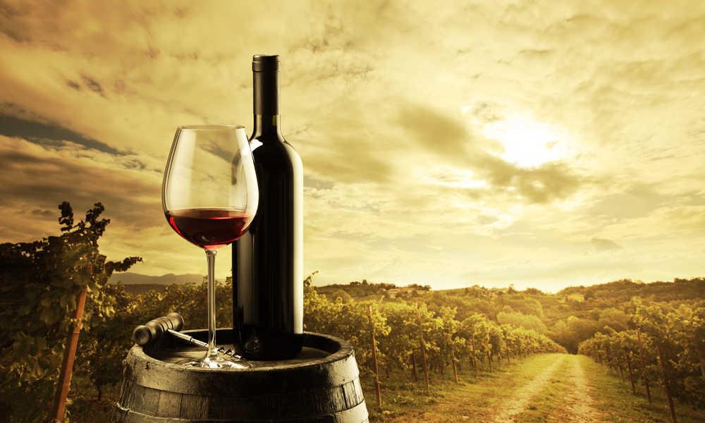 La popularidad del sector vinícola español en cifras